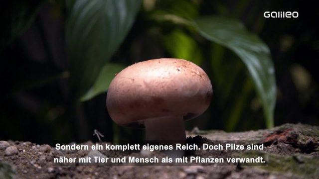 3 unglaubliche Secrets über Pilze