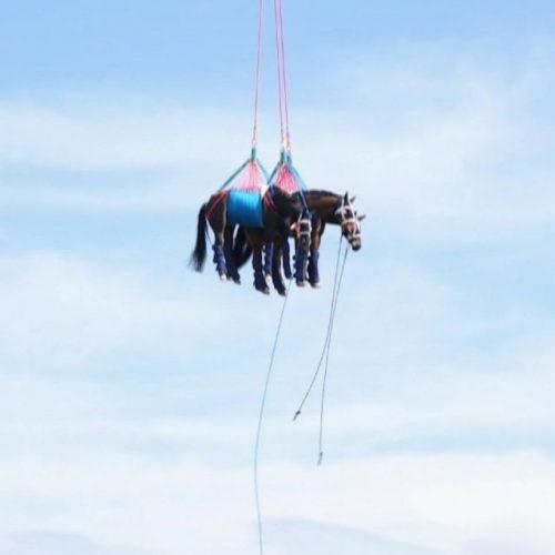 """Beim Anblick der """"fliegenden"""" Pferde reiben wir uns in den Clips der Woche erstaunt die Augen."""