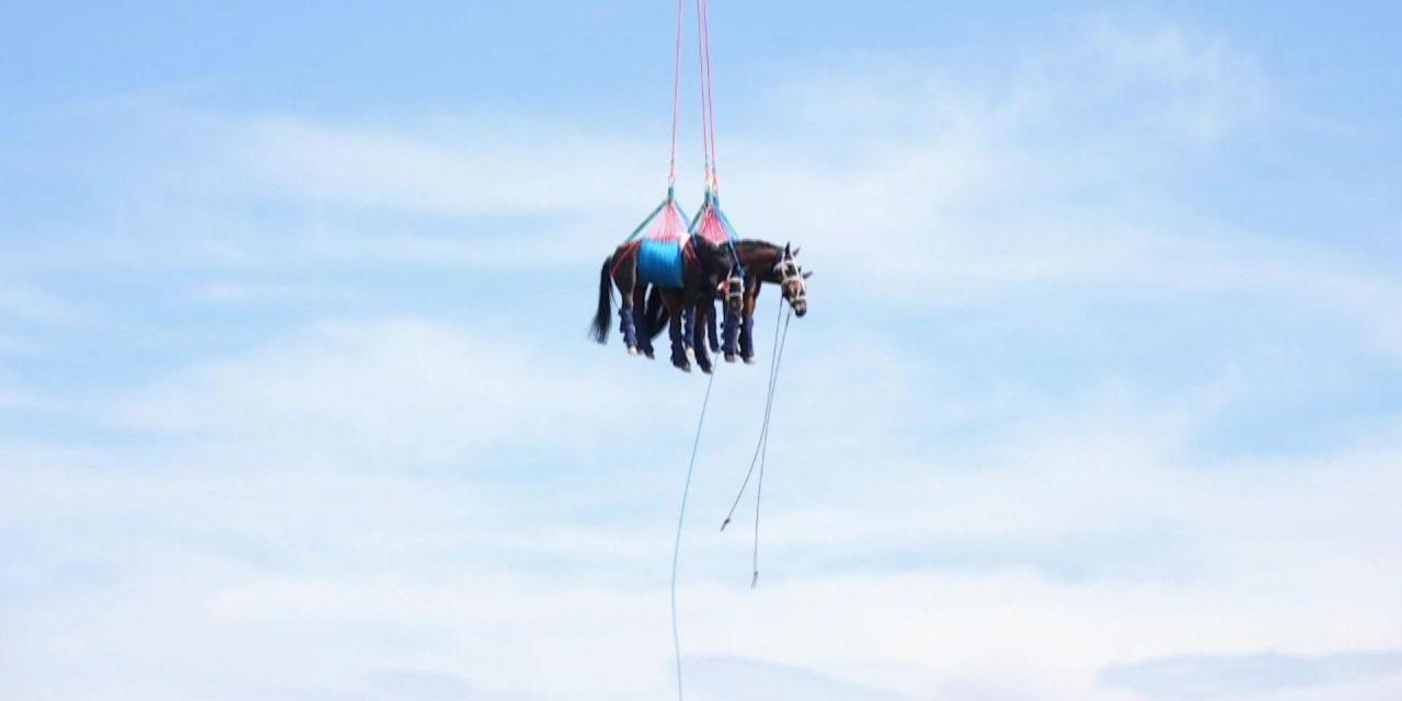 """""""Da steht ein Pferd … in der Luft?"""": In den Clips der Woche geht's hoch hinaus"""