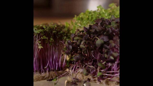 Microgreens: Das neue Ernährungs-Wunder - 10s