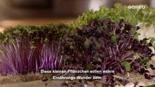 Microgreens: Das neue Ernährungs-Wunder