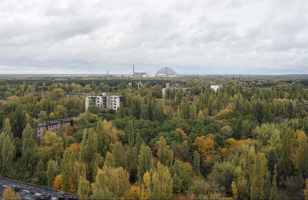 Super-Pilze und schrumpfende Gehirne: Was wir von Tschernobyl lernen