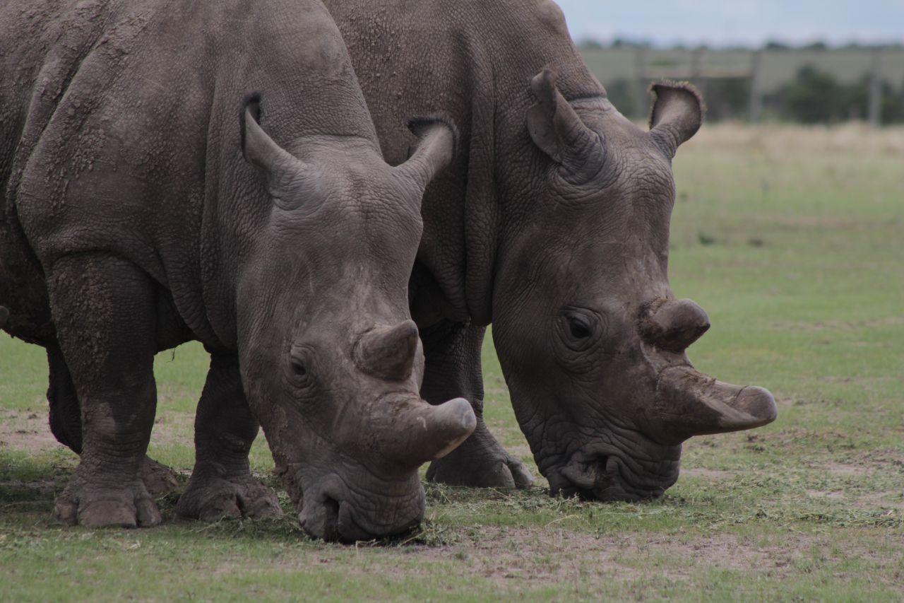 Vom Aussterben bedrohte Tiere: die letzten ihrer Art