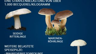 Strahlenbelastung bei Pilzen