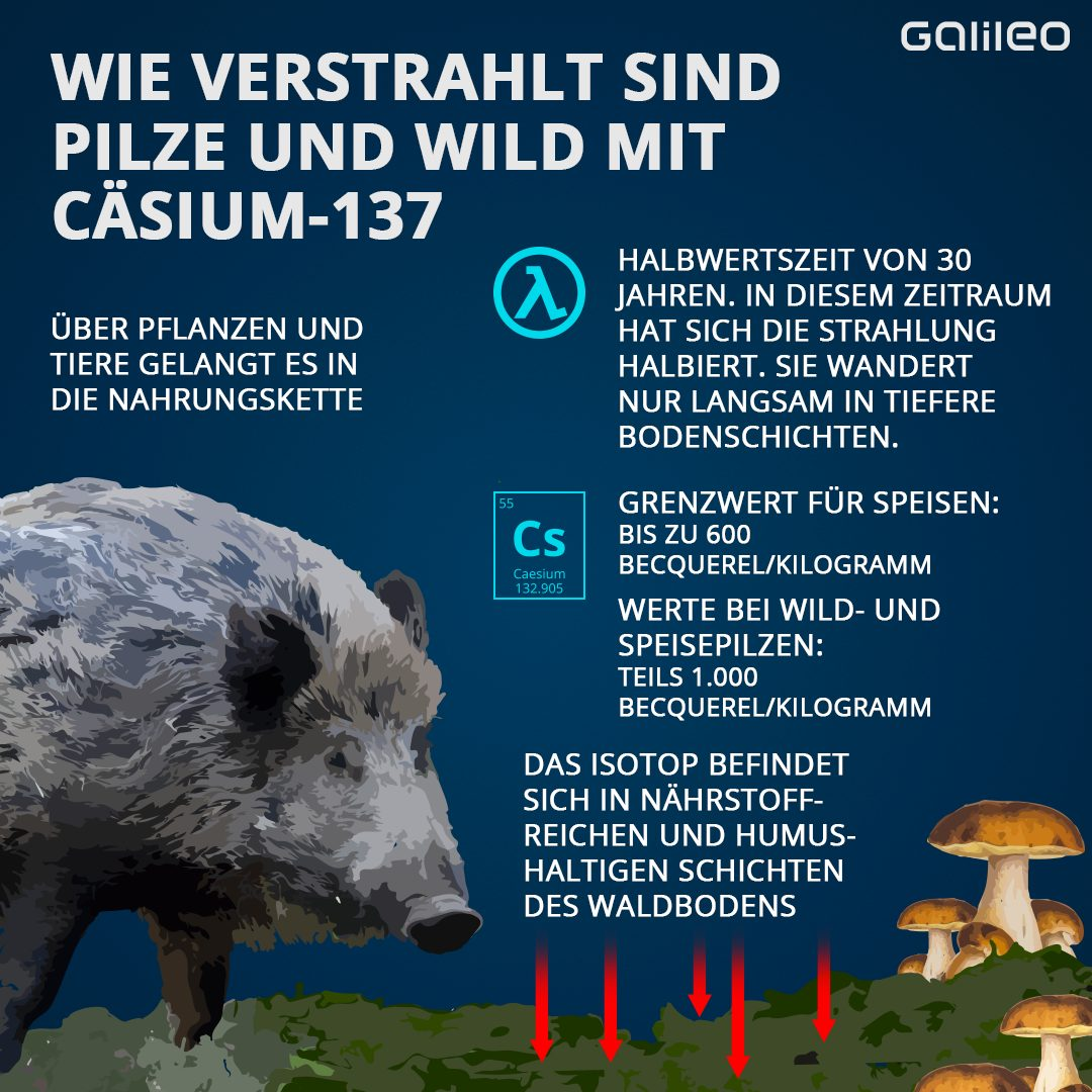 Strahlenbelastung bei Wildtieren und Pilzen