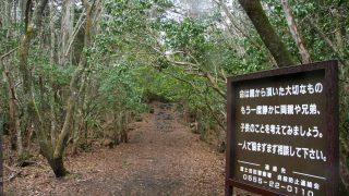 Wald in Japan