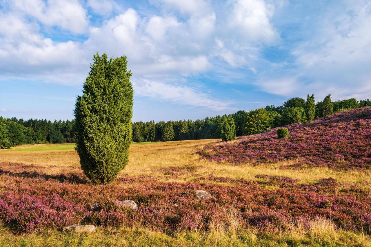 Naturschutzgebiet in der Lüneburger Heide