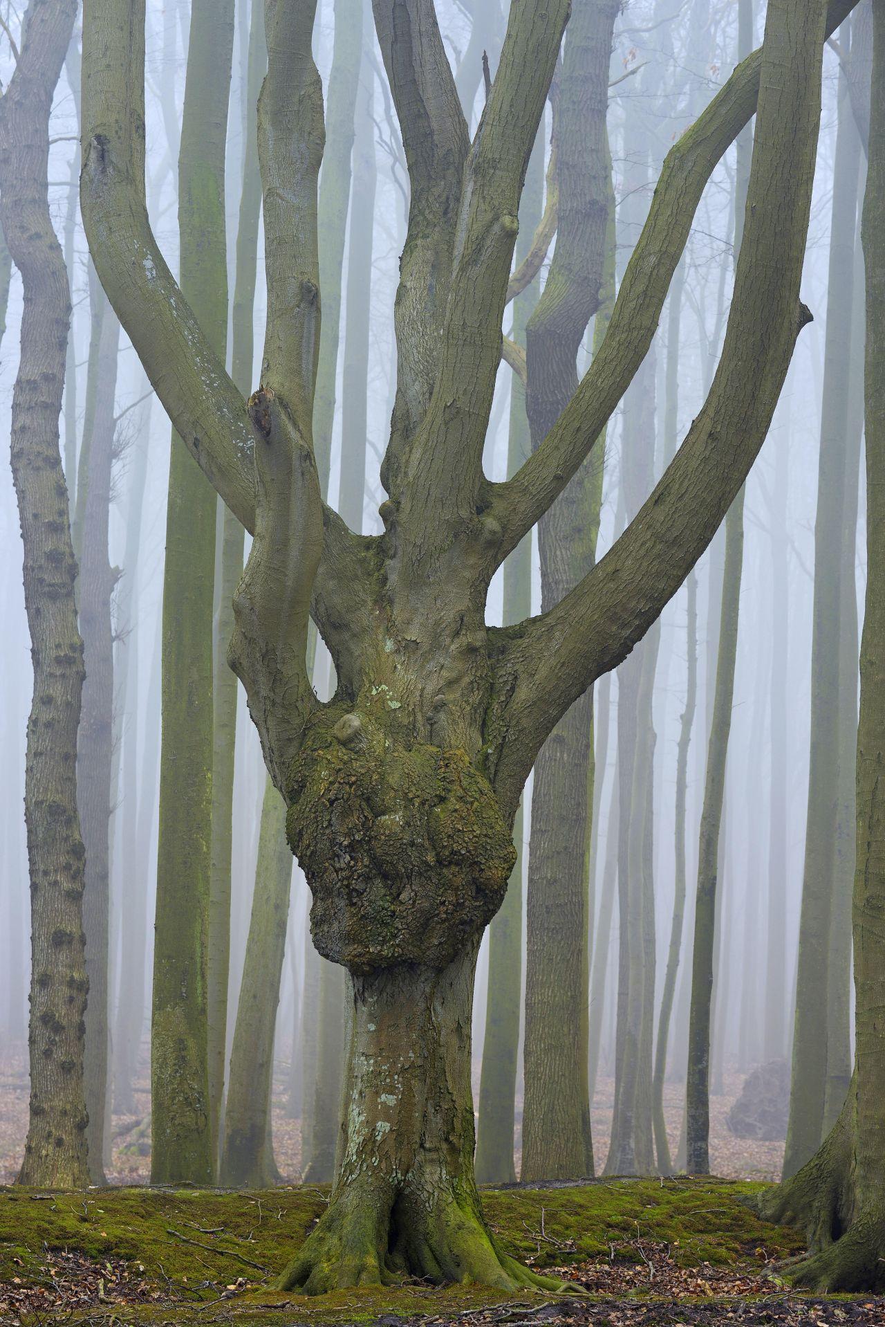 Gespenster-Wald Nienhagen