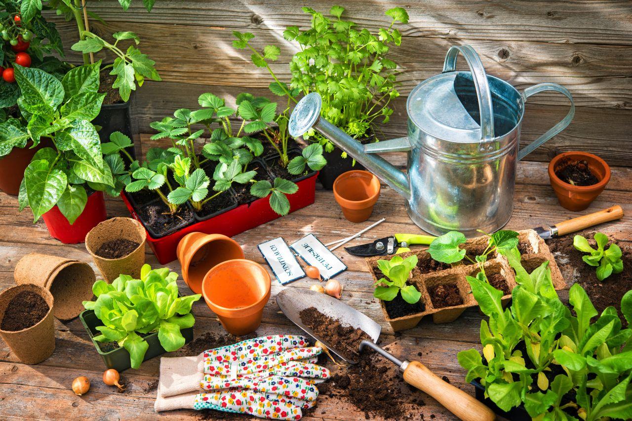 Pflanzen ansäen: So gelingt's, auch wenn du keinen grünen Daumen hast