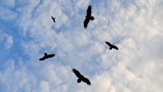 Vögel nutzen Thermik