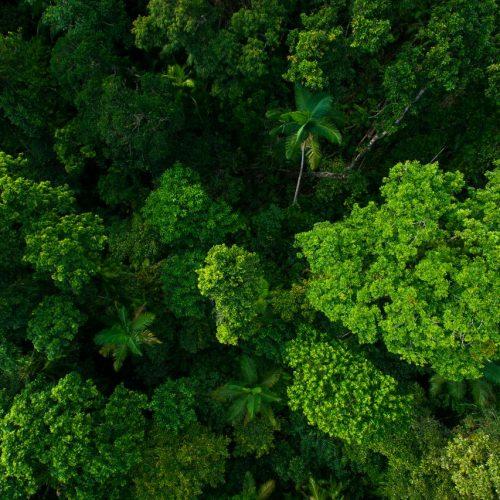 Die Wälder sind die grünen Lungen der Erde. Sie produzieren Sauerstoff, binden CO2 und sind der Lebensraum unzähliger Tierarten. Doch die Wälder sind in Gefahr. Wir zeigen dir, wie du sie schützen kannst.