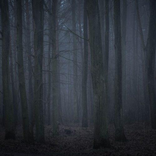 """Flüsternde Stimmen, geisterhafte Irrlichter und verschwundene Menschen - um den transilvanischen Wald Hoia Baciu ranken sich haarsträubende Grusel-Geschichten. Sind sie wahr? Im Clip übernachtet unser wagemutigen Reporter im """"Horror-Wald""""."""