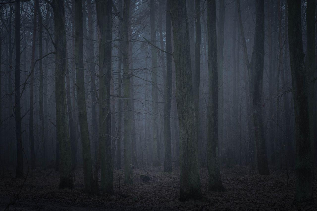 Dunkler Wald mit Grusel-Stimmung