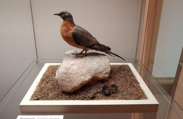 Wandertaibe im Museum