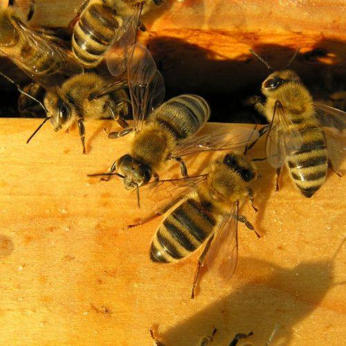 Diese fleißigen Bienchen produzieren nicht nur Honig, sondern haben auch bei Corona-Tests den richtigen Riecher. Außerdem: Ein spaciger Wein reiste durchs All - und ist nun ein Vermögen wert.