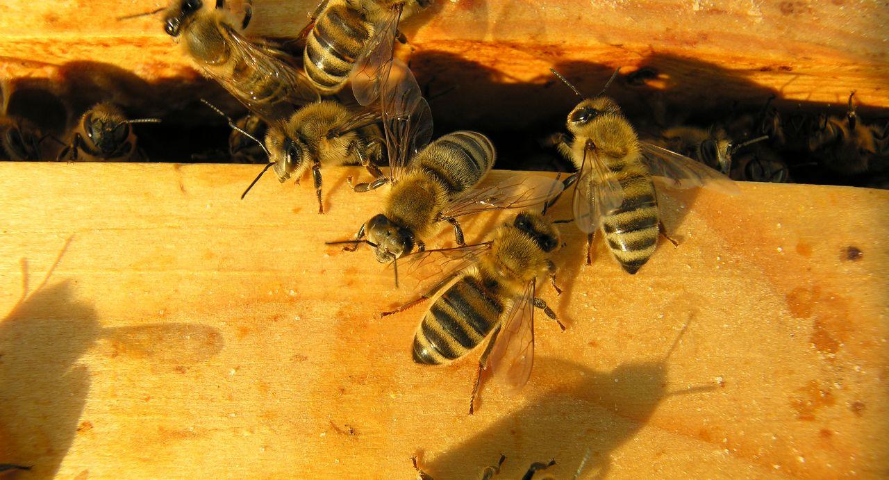 Bienen als Corona-Tester und Wein auf Weltraum-Reise - in den Clips der Woche