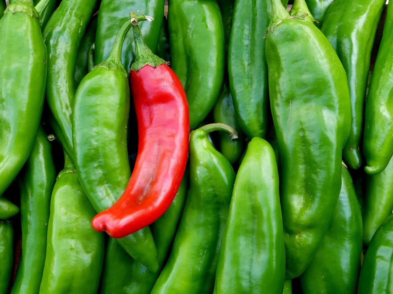Chili rot grün