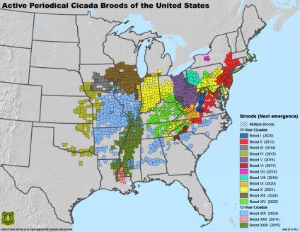 Karte Zikaden Brut in den USA