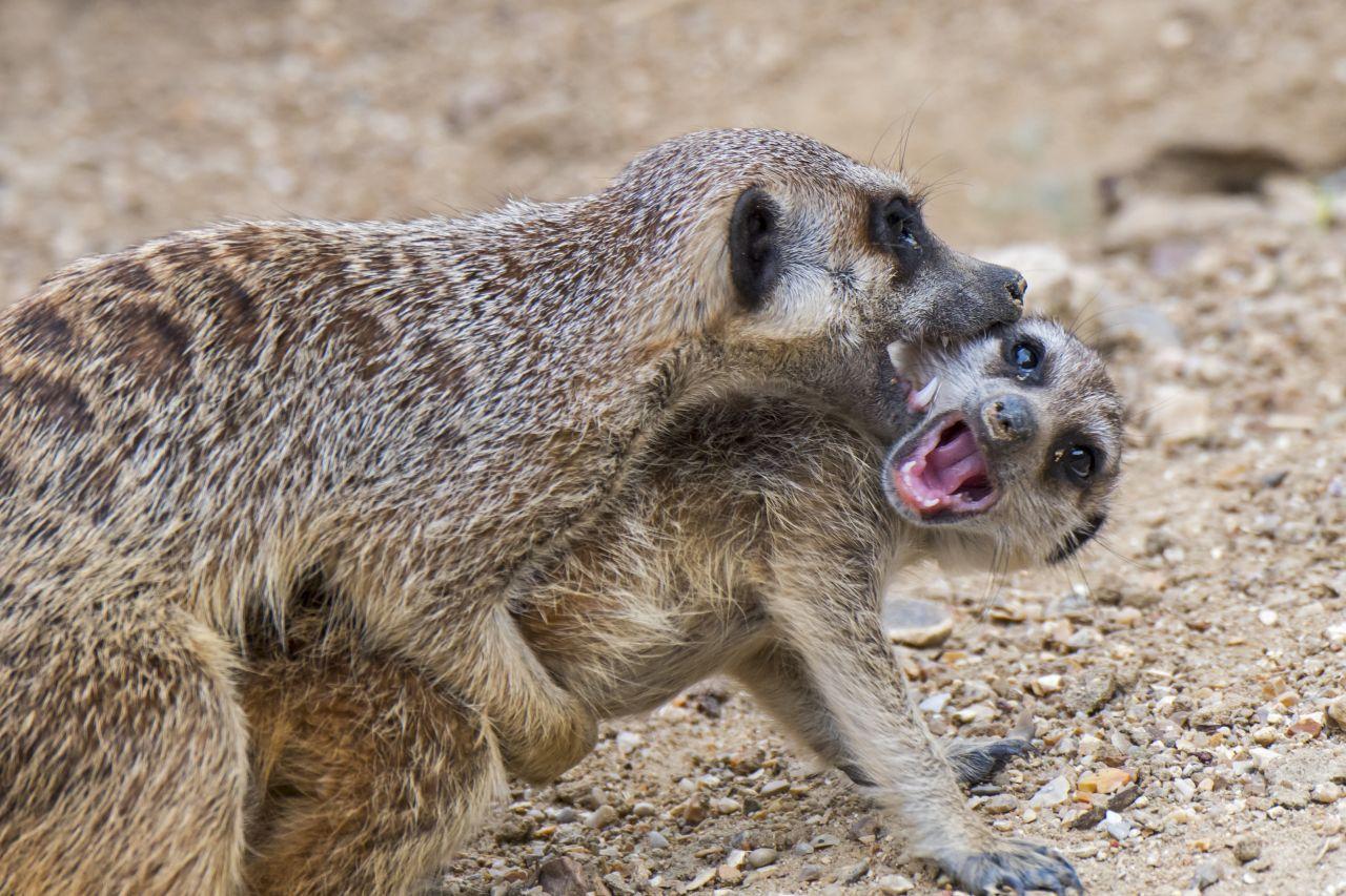 Anknabbern, abtanzen, Häusle bauen: So verrückt flirten Tiere