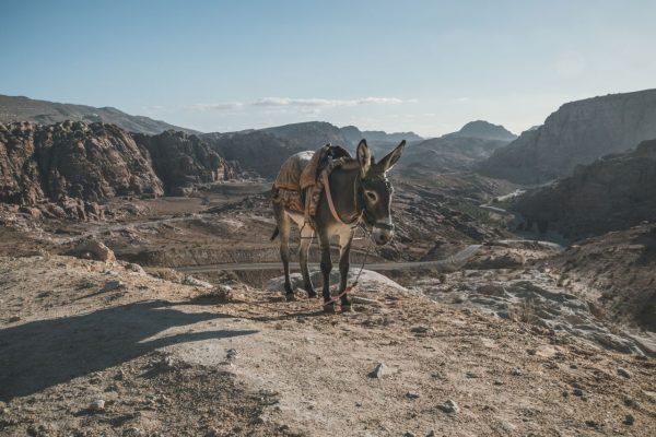 Ein Esel steht im Gebirge