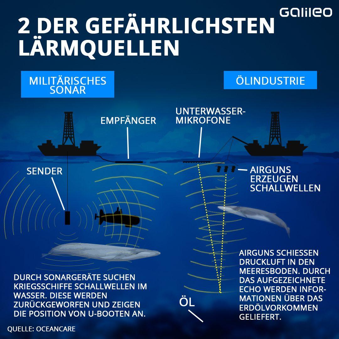 Militär und Ölindustrie sind unter Wasser am lautesten