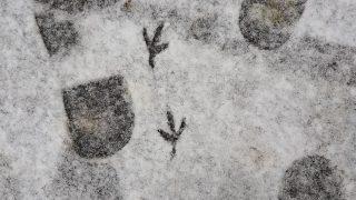 Spuren eines Menschen und einer Taube