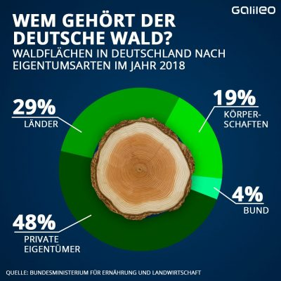 Grafik: Wem gehört der Wald?