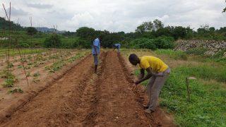 Nigeria-Landwirtschaft