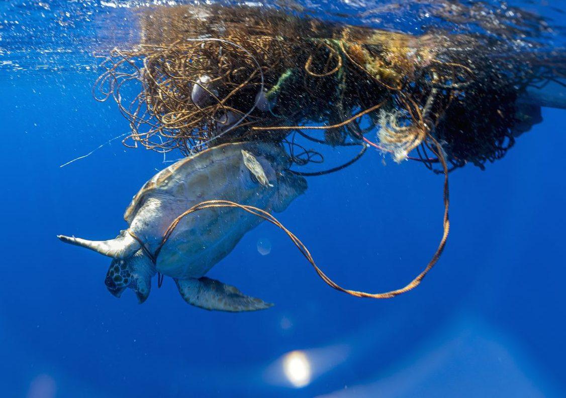 Plastikfressende Bakterien: Retten sie uns vor der Kunststoff-Katastrophe?