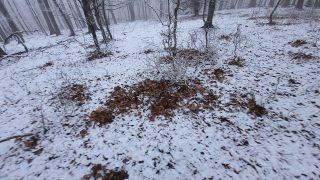 Laub liegt auf dem Schnee