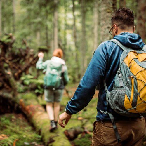 Wer die Augen aufmacht und neugierig ist, kann im Wald viel entdecken.