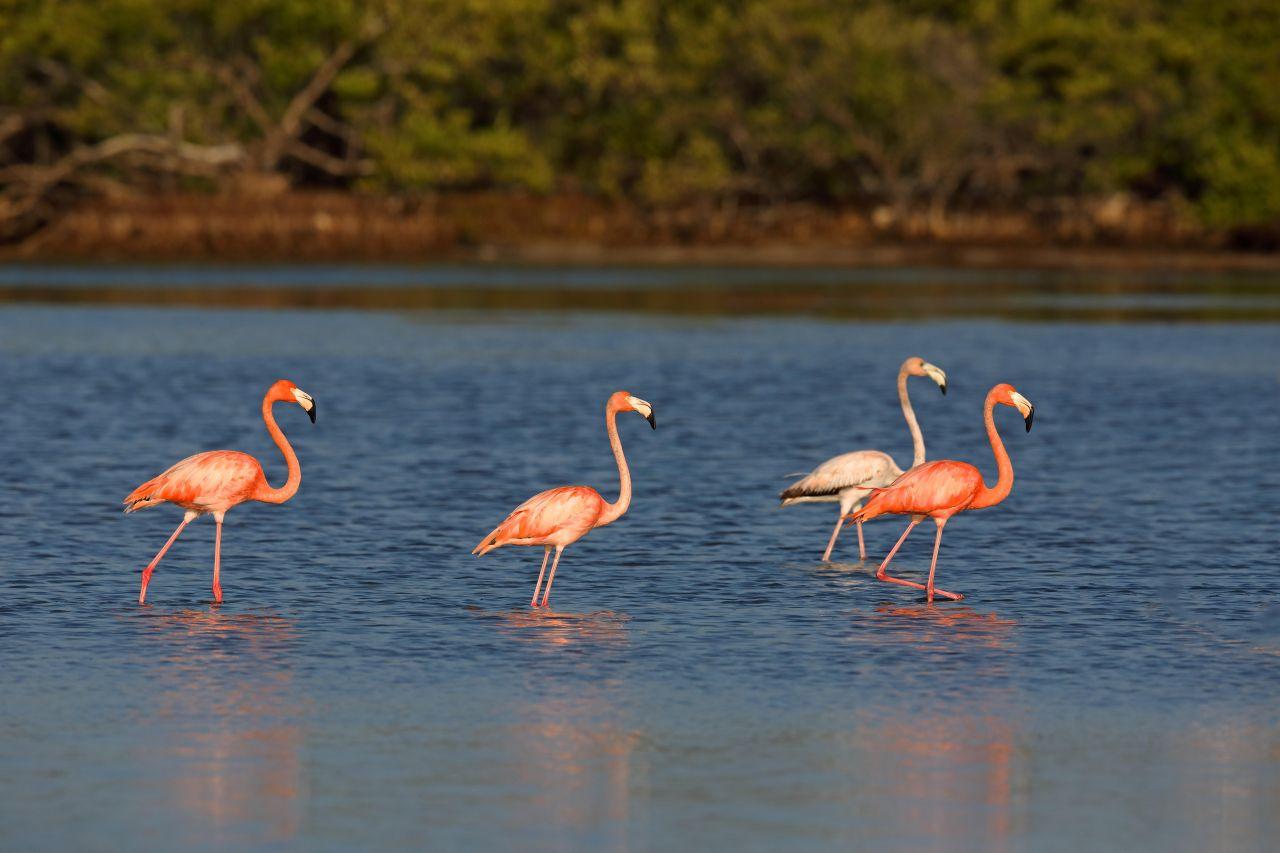 Kuba - Nationalpark - Zapata