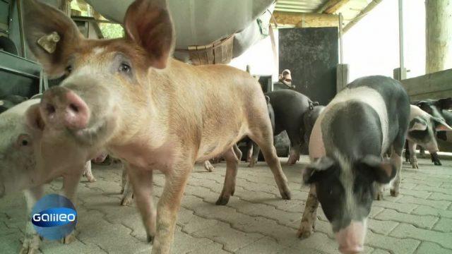 Tierhaltung 2.0 - Eine bessere Welt für Tiere?