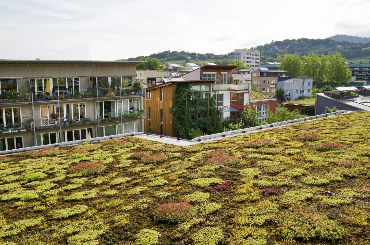 begrüntes Dach in Freiburg