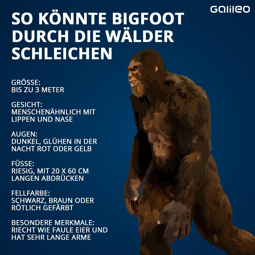 Bigfoot Grafik