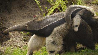 Baby auf dem Rücken seiner Mama