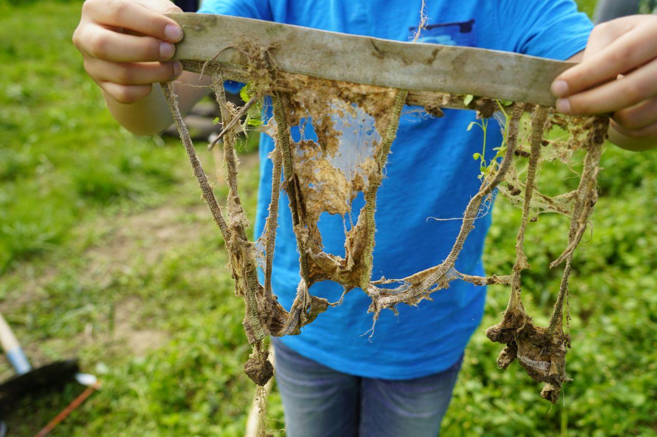 Lebewesen im Boden entdecken: Vergrab deine Unterhose für die Forschung!