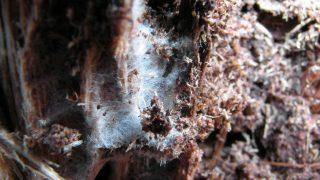 Mykorrhiza Pilze