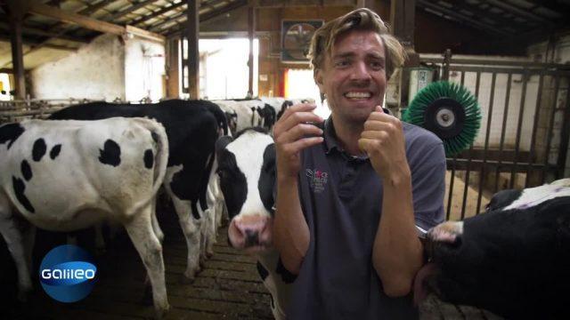Kühe melken & Ställe säubern - 2 Tage als Milchbauer