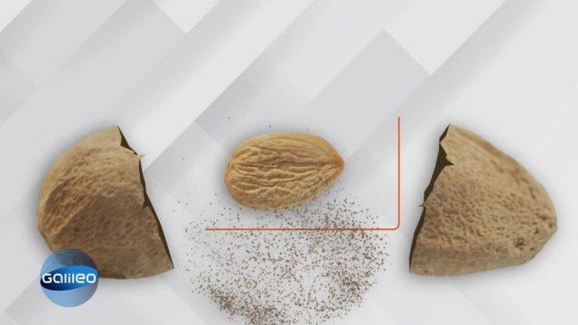 """Obstkernspaltung - Wie man aus """"Müll"""" mehr macht"""