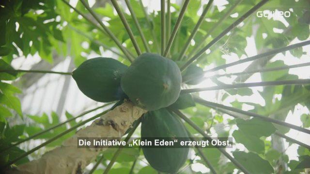 Tropenhaus: Exotische Früchte aus Deutschland