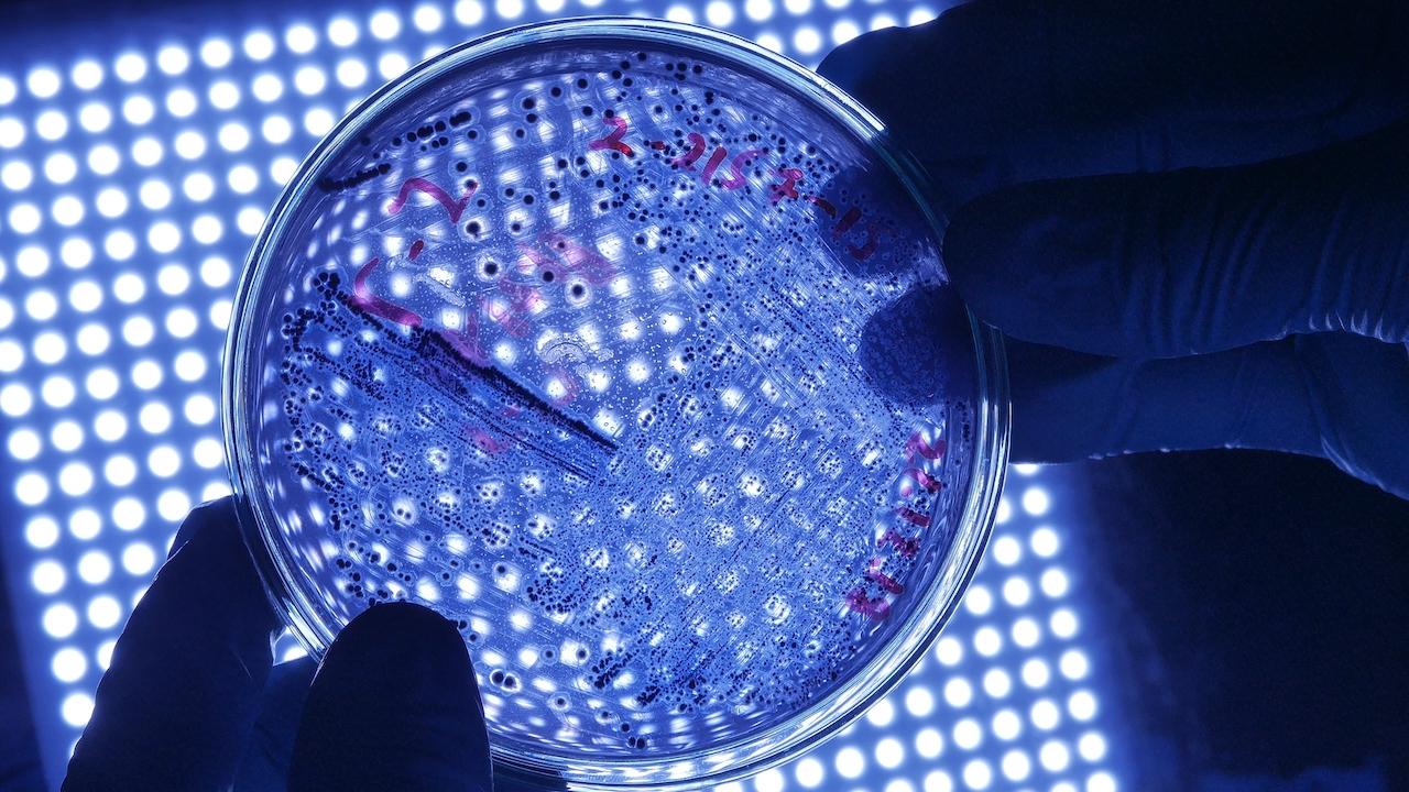 Petrischale mit Bakterien, Pilzen und Viren