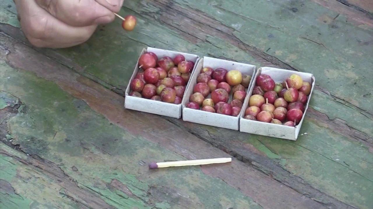 Clips der Woche: Die wohl kleinsten Äpfel und ein Messias-Roboter
